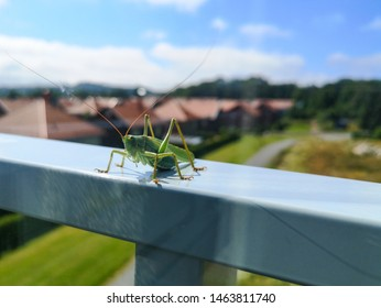 Grasshopper on railing behind glass window on third floor at summer in Norway