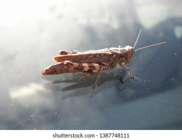 Grasshopper on the windshield in summer
