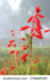 Grasshopper perched on a red flower