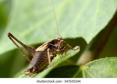 Grasshopper sitting on a leaf