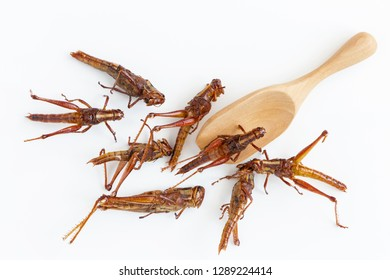 grasshoppers or locust on the white table. The concept of protein food sources from insects. It is a good source of protein and iron.