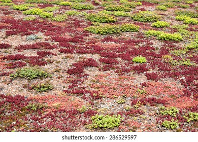 Grassing on a roof / Green Roof