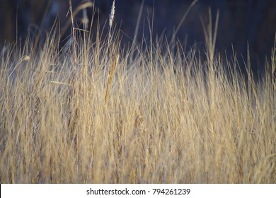 Grassland background texture grassland