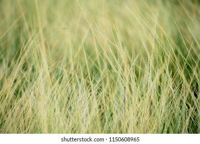 grassland background / texture ; grassland in premium look
