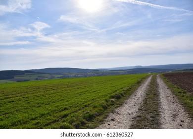 Grassland and dirt road, landscape
