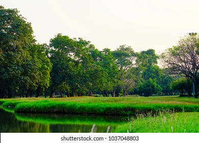 A grassland at the green park at dusk with a row of tropical trees and lake view