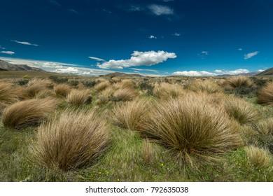 Grassland at Lake Heron, Canterbury, New Zealand