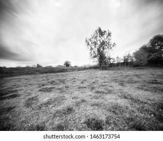 grassland with a large tree, this black and white camera obscura photo is NOT sharp due to camera characteristic. Taken on analogue photographic large format negative film with a pinhole camera