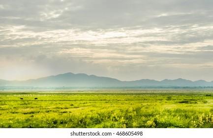 grassland, a prairie, a pampas, a pasture.