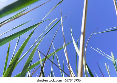 Grassland shot from below