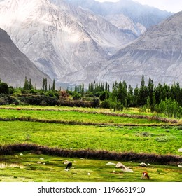Grasslands, Desert, Forest, Mountains all in one place. This is Nubra Valley