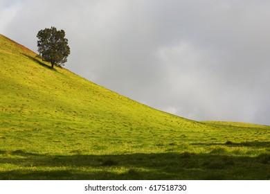 Grasslands in Kohala area of the Big Island, Hawaii