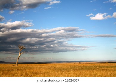 Grasslands of the Masai Mara Reserve (Kenya)