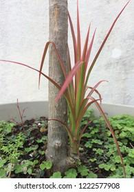 Grassroot level flora