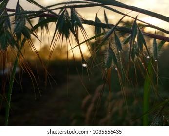 grasss with sun