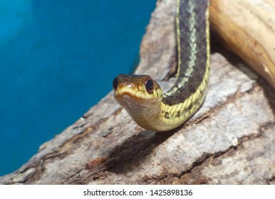 grass-snake reptile snake environment nature animal venomous