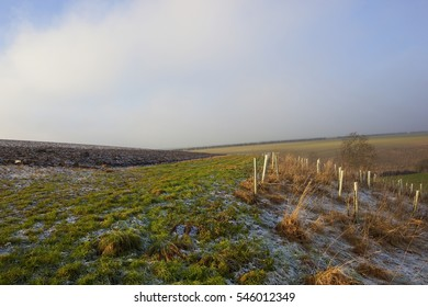 a grassy bridleway with plow soil and saplings on a foggy icy day in a yorkshire wolds landscape under a blue cloudy sky