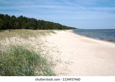 Grassy coast gulf of Riga, Baltic sea.