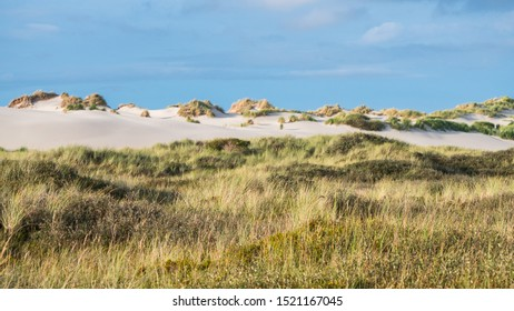 Grassy dunes on the island of Terschelling