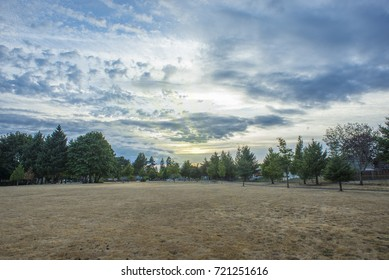 Grassy field with cloudy sunset and evergreen trees