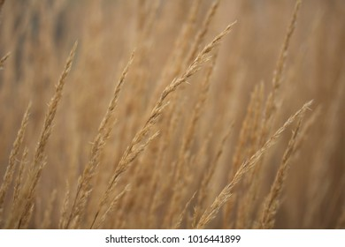 grassy field in the fall background