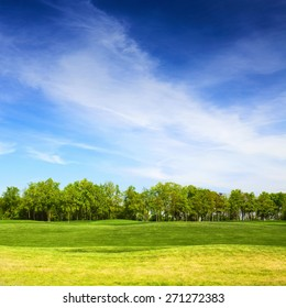 grassy field and trees with blue sky on background, landscape in summer day