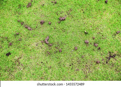 The grassy ground with many earthworms' feces shows that the ground there is rich., Feces of earthworms in a green lawn.