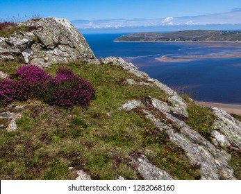 A grassy hill above Conwy, North Wales, with heather and patches of exposed rock. The Irish Sea is visible far down below along with the limestone headland of The Great Orme in Llandudno