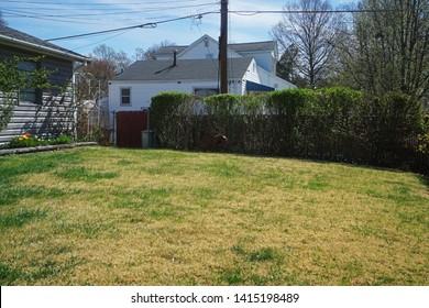 Grassy lawn in the backyard garden