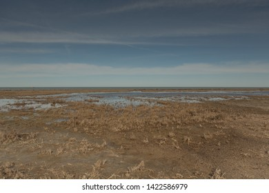Grassy marshes in front of the Aral sea, the sea goes into the horizon