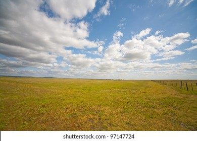 Grassy meadow on a nice summer day