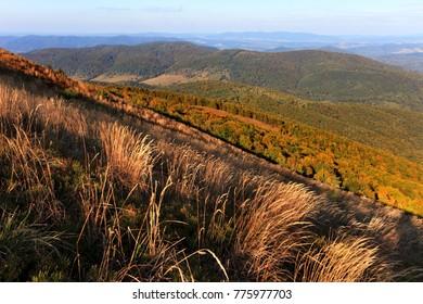 Grassy meadow slopes of the Magura Nasiczanska and Magura Stuposianska hills in Bieszczady Mountains in South East Poland - Bieszczadzki National Park.  - Shutterstock ID 775977703