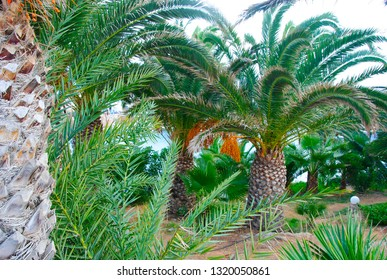 The grassy palm bay of Sisi on the mediterranean island Crete in Greece