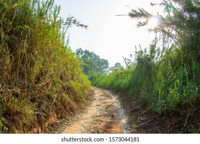 Grassy path into the light