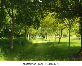 Grassy path through trees in a park in spring