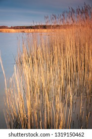 Grassy reeds by the sea.