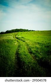 Grassy Road