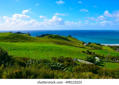 A grassy shore in Great Barrier Island, New Zealand