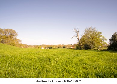 Grassy summer meadow background