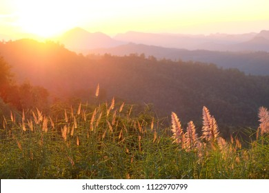 Grassy with sunlight behind is nice sunset scene over misty mountains range with visible silhouettes through the evening colorful.