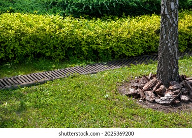 grate drainage system on lawn with green grass and bushes in backyard garden with tree trunk bark and mulching, rainwater drainage system in park among plants lit by sunlight, nobody.