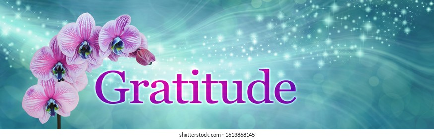 Gratitude Orchid Sparkle Banner - wide jade green flowing sparkle bokeh background with a sprig of Orchid and four flowers beside the word GRATITUDE