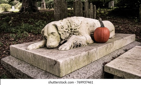 Grave of a dog