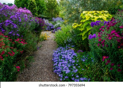 A gravel path between flowering borders of Aster- The Picton Garden- Worcestser