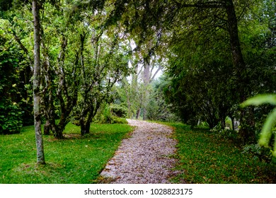 gravel path, surrounded by trees and bushes, being bathed in lig