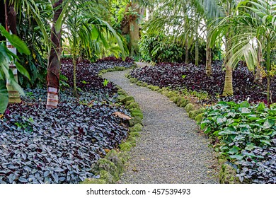 Gravel pathway through the lush jungle setting of Wahiawa Botanical Gardens on Oahu, Hawaii