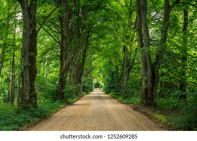 Gravel road among trees on a summer day near Gizycko, Masuria, Poland