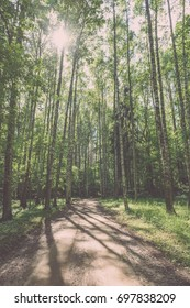gravel road in birch tree forest with sun rays, shadows  and green leaves - vintage film look