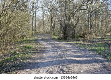 Gravel road by early springtime in a nature reserve at the swedish island Oland