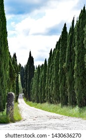 Gravel road flanked by evergreen cypress trees - Tuscany, Italy